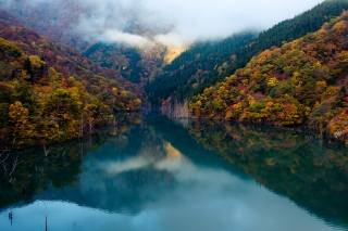осінь, ліс, природа