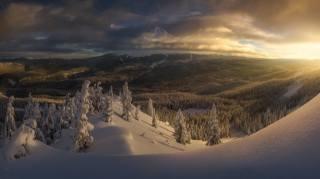 зима, сніг, замети, дерева