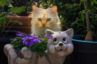 кішки, двоє, погляд, тварини