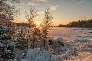 winter, snow, forest, sunset