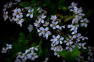 весна, гілочка, квіти