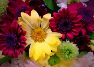 виньетка, фон, квіти