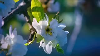 větvička, květiny, jaro