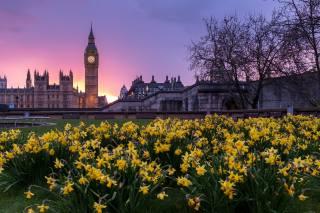 дерева, квіти, місто, газон, лондон, будівлі, башта, весна, вечір, Великобританія, Біг-Бен, нарциси, Лондон, Сполучене Королівство, Вестмінстер