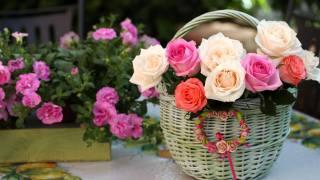 кошик, рожеві, білі, троянди