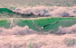 прибій, хвилі, океан, чайка
