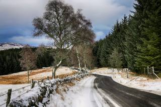 nature, winter, Hilda Murray, road, forest, fence, mountains