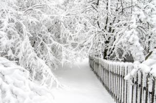 зима, сніг, красиво, дерева