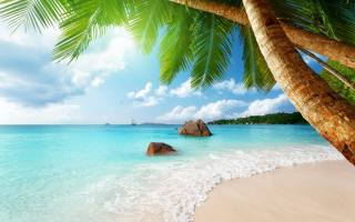 nature, summer, tropics, the beach, palm trees, leaves, the sun, rays, sea, water, wave