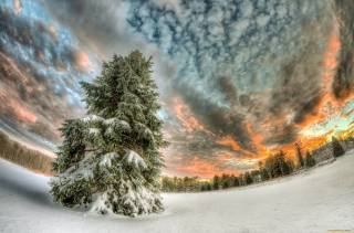 зима, сніг, ліс, дерево