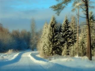 природа, краєвид, ліс, зима, сніг, дорога