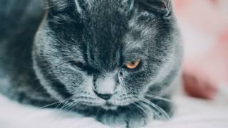 чорна кішка, дивиться, на тебя, особа, очі, спокій