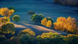 осінь, дерева, луки