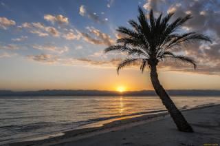 закат, небо, солнце, море, пальмы