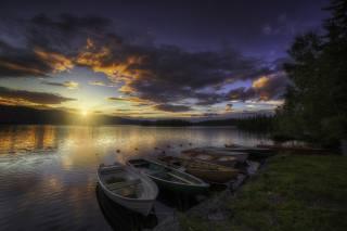 Норвегия, дерево, пейзаж