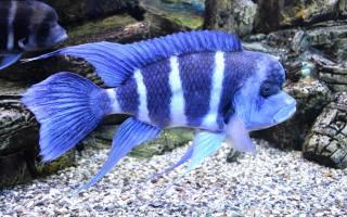 рибка, підводний світ