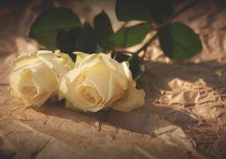 жовті троянди, сонце
