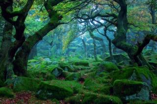 деревья, мох, камни