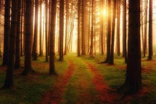 ліс, туман, дерева, мох, природа