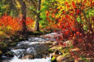 stromy, les, řeka, příroda