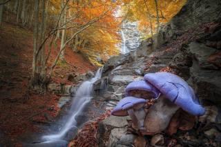 осінь, ліс, дерева, краєвид, природа, каміння, гриби, водоспад, каскад, Roberto Aldrovandi
