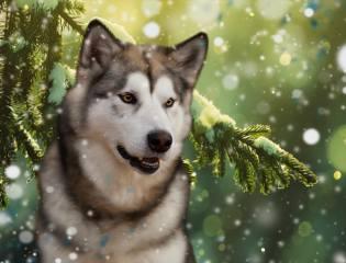 3d, цифрове мистецтво, графіка, природа, зима, гілка, ялина, сніг, Тварина, собака, пес, маламут