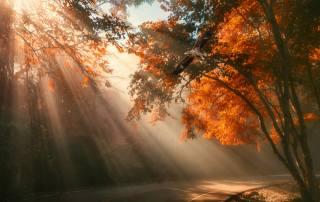 den, les, cesta, orel, světlo
