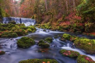 осінь, струмок, протягом, водоспад, річка, ліс, дерева, каміння, мох, природа