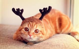милий, котик, з, рожками, оленя