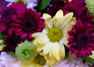 квіти, осінь, жовтень