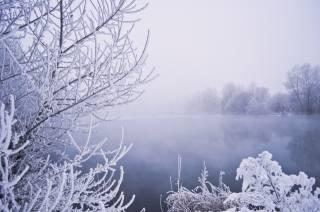 природа, пейзаж, зима, озеро, деревья, КУСТЫ, иней, туман, снег