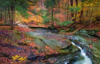 ліс, дерева, струмок, краєвид