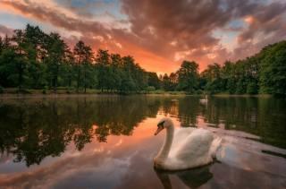 jezero, les, nebe, labutě, krajina, podzim