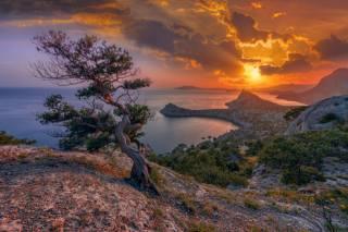 краєвид, дерево, гори, небо, захід, зоря, берег