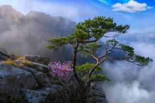 krajina, skály, strom, květiny, hory, nebe, mlha