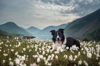 nature, landscape, dog, dog, the border collie, Animal, mountains, the lake, grass