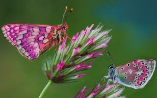 butterfly, flowers, background