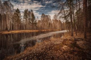 the river, ice, forest, nature, photo, Николай Шевченко