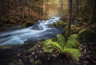 nature, autumn, Ole Henrik Skjelstad, forest, stream, stones, moss, fern