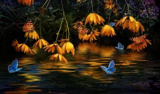квіти, метелики, вода