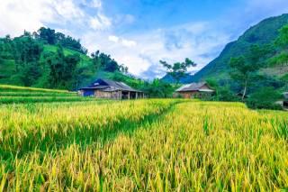поле, рис, вдома, гори, небо