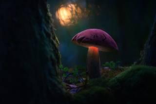 mushroom, moss, macro