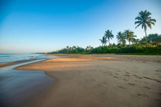 Sri Lanka, coast, sea, Bentota, beach, palm trees, the beach, nature
