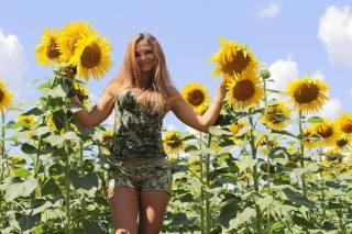 holka, slunečnice, léto