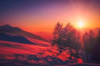 зима, сніг, ліс, замети