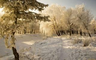 ліс, сніг, зима