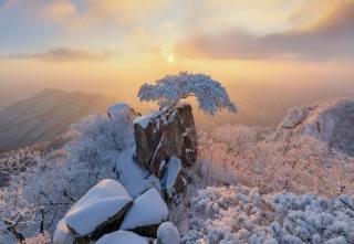 зима, краєвид, Nathaniel Merz, гори, скелі, сосна