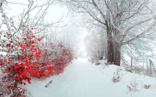 зима, сніг