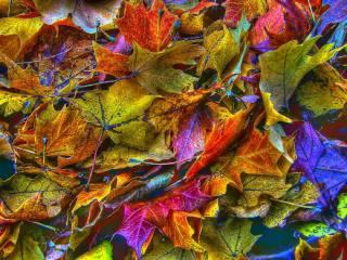 листя, осінь, фото, фентезі