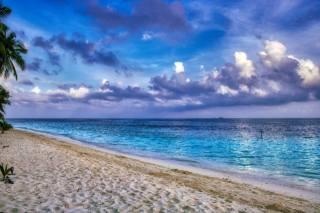 пальма, пляж, пісок, океан, небо, тропіки